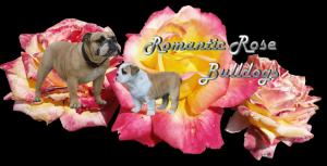 Romanticrosebanner