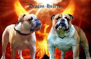 Dragon- Hearts